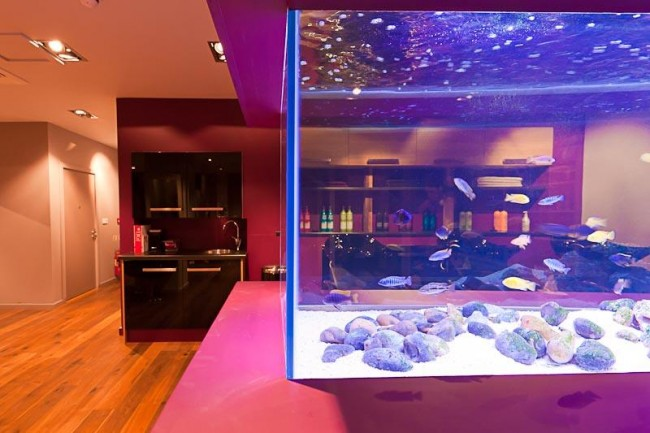 Aquarium Maintenance and Installation from Seefish Devon